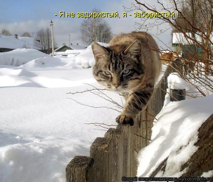 kotomatritsa_gY (700x595, 384Kb)