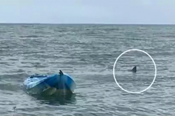 Огромная белая акула сделала с девушкой такое, что все замерли в ужасе!