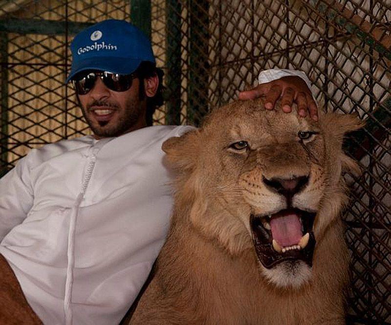 catsncars14 Хищные кошечки и дорогие машины: досуг арабского миллионера