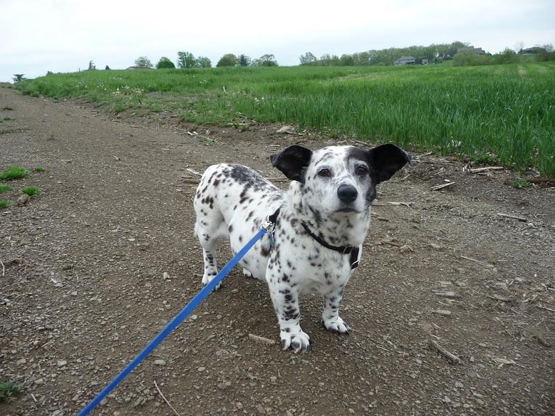 dogmixes02 Cамые необычные породы собак