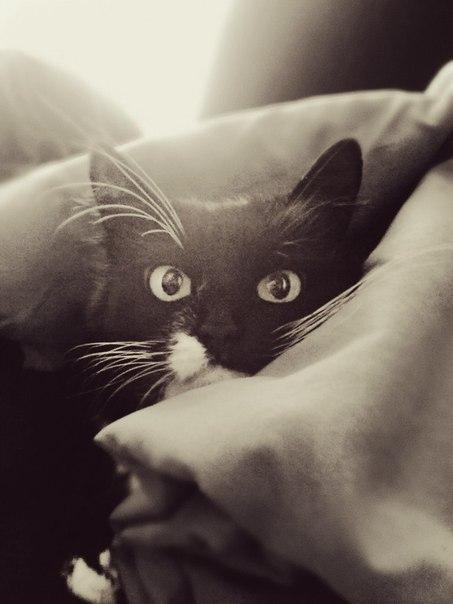 Первая социальная сеть про кошек www.pincat.ru Опубликуй фото своего любимца, веди блог о его жизни! #фото #кошки #cat