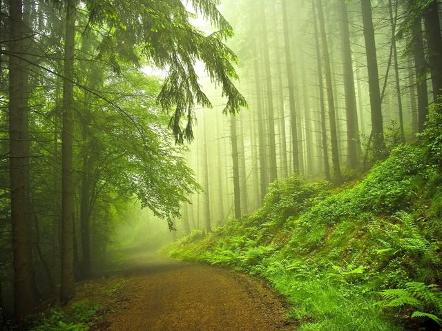 Интересные факты о хвойных растениях