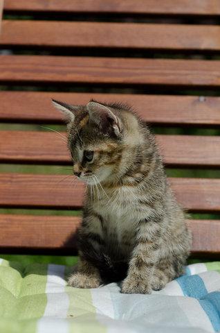 """Суперпредложение: котята """"Классные"""" по спеццене!"""