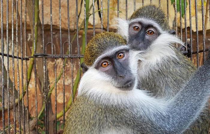 Две обезьянки пережили полгода ужасного заточения только благодаря поддержке друг друга