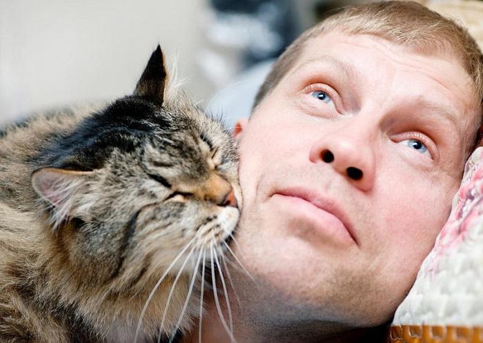 кот лижет человеческий член