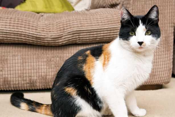 Кот-уникум шокировал ветеринаров