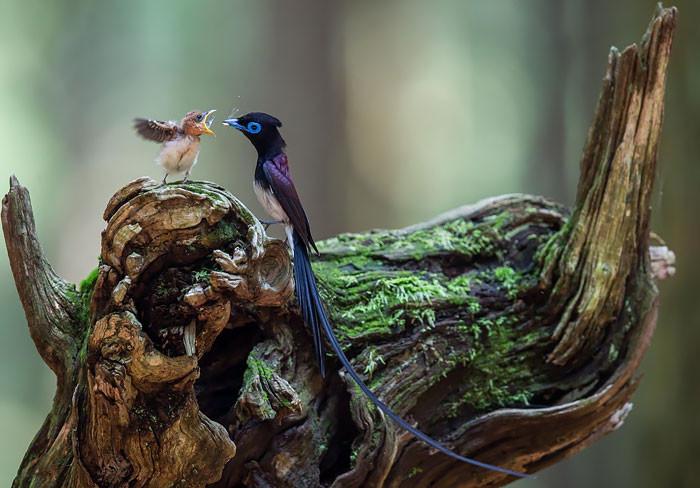 Трогательные фотографии птиц…