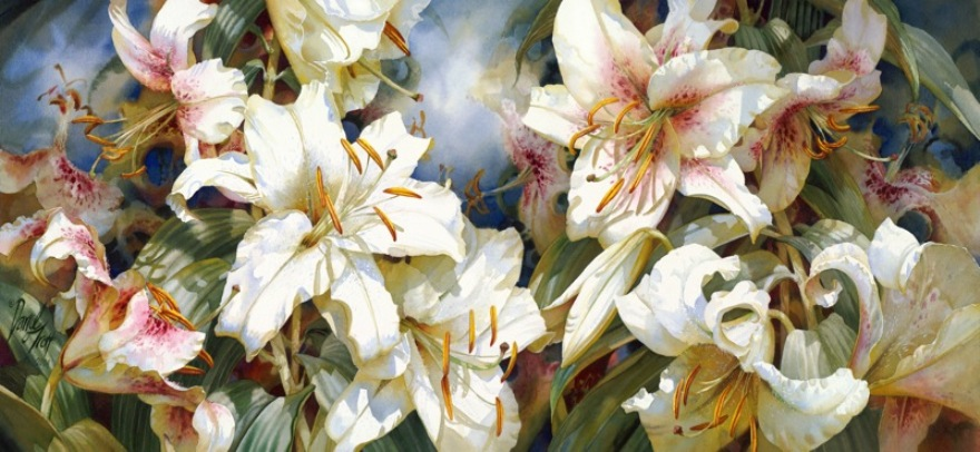 Цветы Darryl Trott