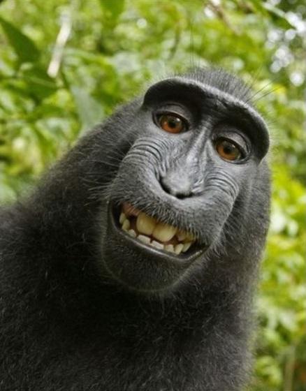 10 интересных фактов из жизни животных. (юмор)