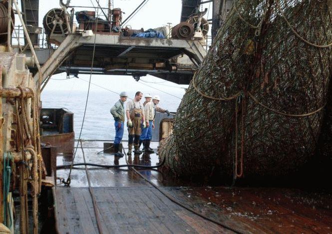Эти рыбаки разгружали сети, когда увидели нечто ужасное… Вот так улов!