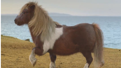 Танцующий пони стал звездой YouTube