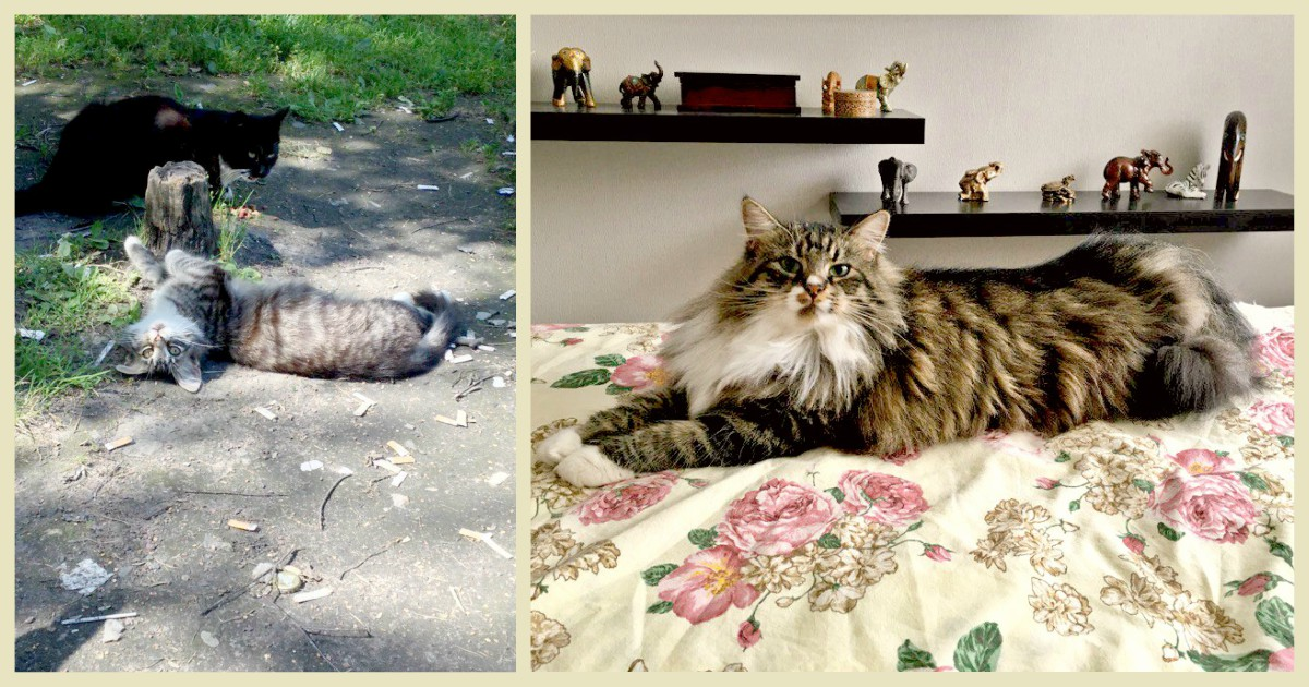 "Пугливая кошка Маргошка играла окурками и спала на дереве… ""Хватит!"", – решили люди"