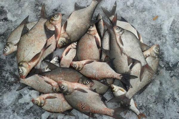 Шевелись, плотва — ищем рыбку зимой