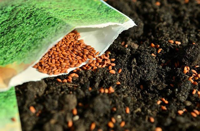 Посев семян на рассаду: как избежать серьезных ошибок