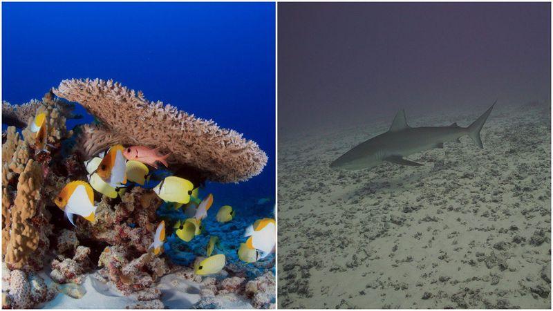 Уникальный коралловый риф на Гавайях уничтожен ураганом