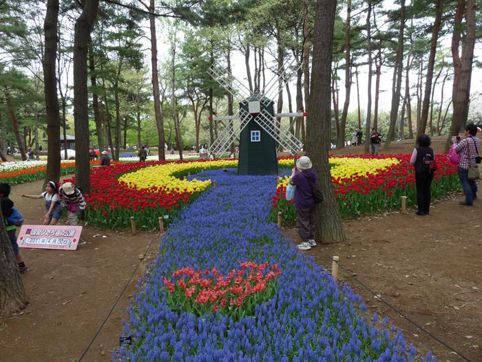 Парк Хитачи красота, парк, природа, факты