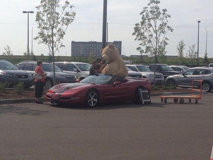 Большой подарок девушке авто, медведь, подарок, chevrolet, corvette