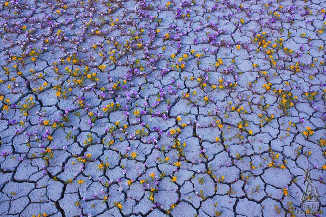 Цветочный сад в пустыне Западной Америки