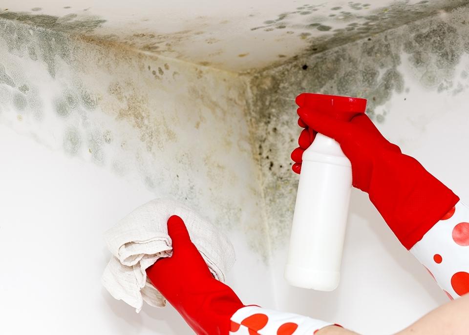6 быстрых и простых шагов для борьбы с запахом плесени