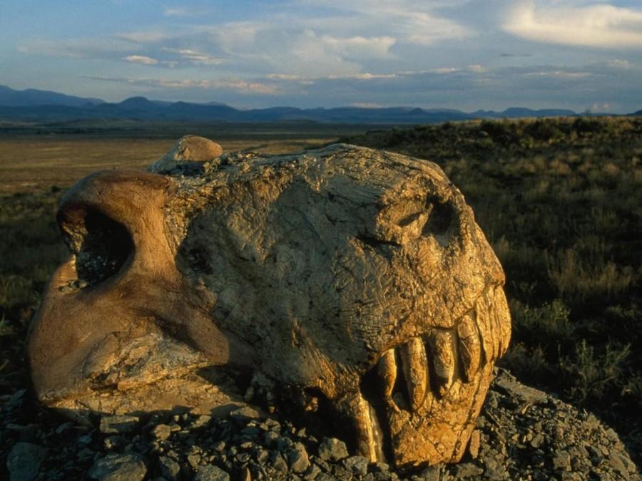 18 месяцев тьмы. Cмоделированы последствия падения астероида убившего динозавров