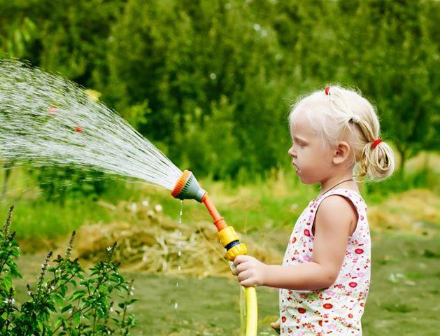 Сколько воды нужно кустам и деревьям в жару