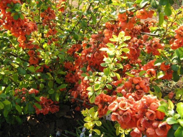 Фото цветов - Фотоистории, фотоотчеты - Форум Лепесток