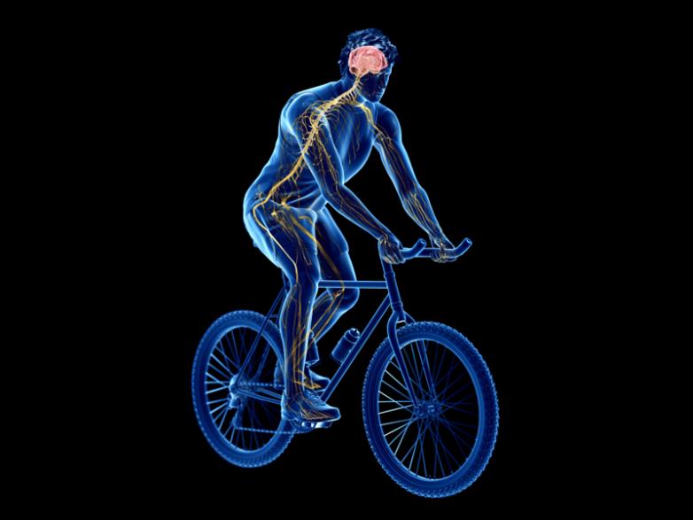 Почему нельзя разучиться кататься на велосипеде