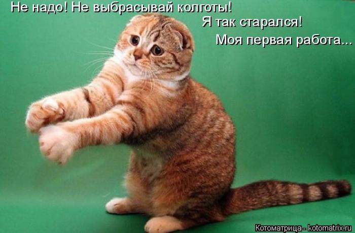 kotomatritsa_VS (700x459, 264Kb)