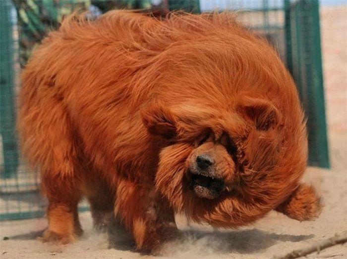 Животные, о которых вам не рассказывали животные, необычные животные