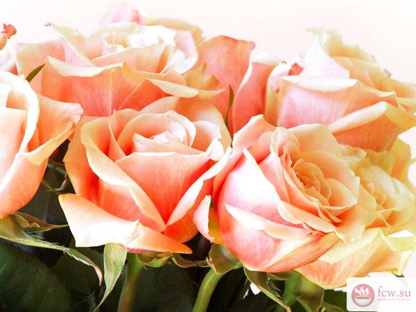 Как продлить жизнь букету из роз