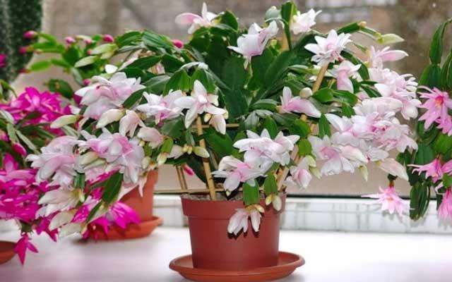 plants0115-7.jpg