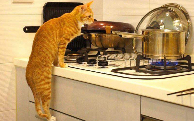 30 способов использования котов в хозяйстве хозяйство, позитив, юмор, животные, кот