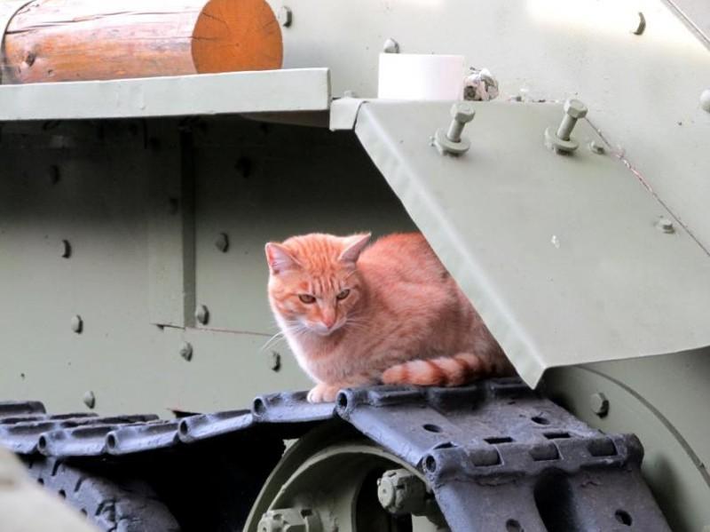 Кот и БТ-7 бронетехника, животные, коты