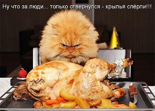 Котоматрицы с кулинарным уклоном 18