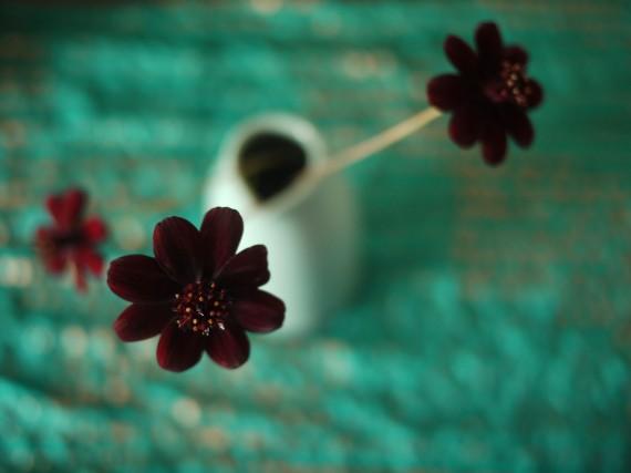 Редчайшие цветы на Земле