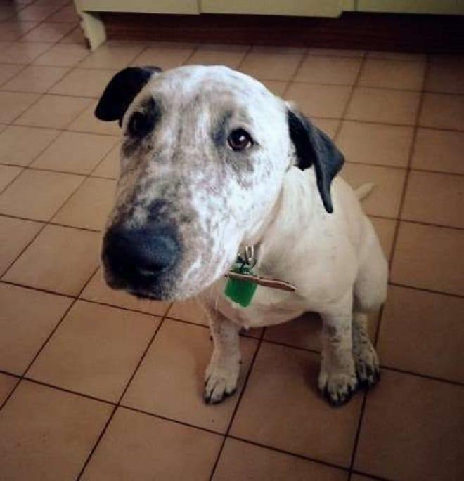 «Большие грустные глаза»: собака, которую дважды бросили хозяева, наконец-то обрела счастье