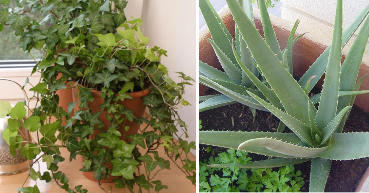 5 комнатных растений для спальни, которые обеспечат здоровый и полноценный сон