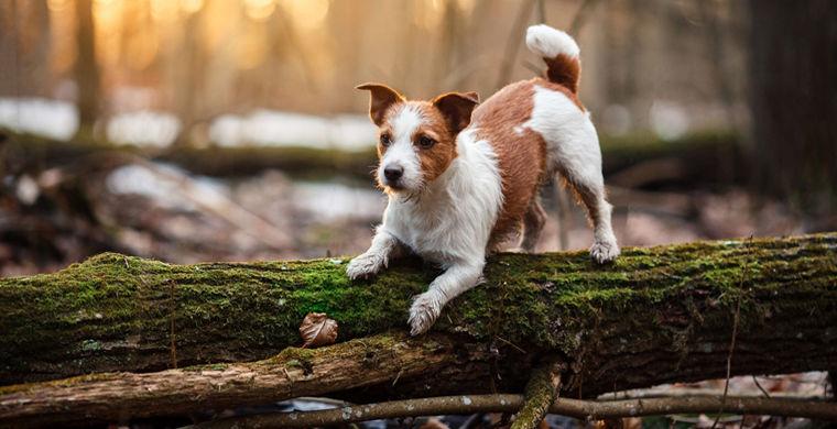 Обнаружена новая опасность домашних животных