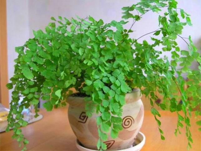 Растения для любви и счастья