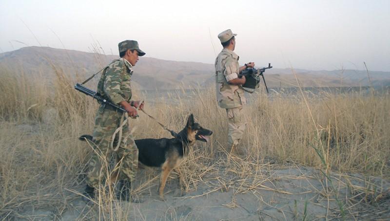 Американцы бросили собак в Афгане