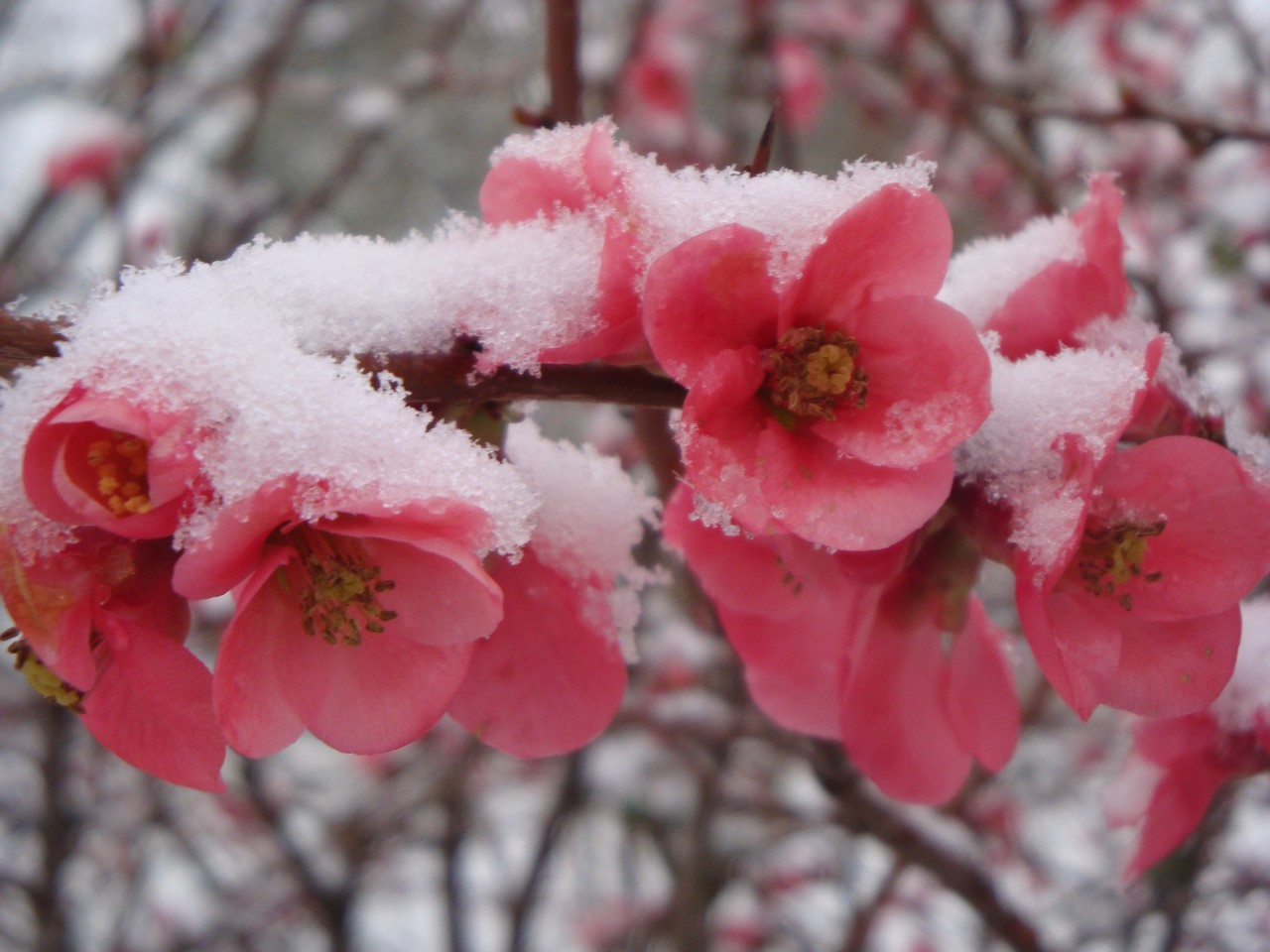 Цветы цветущие до зимы и их фото
