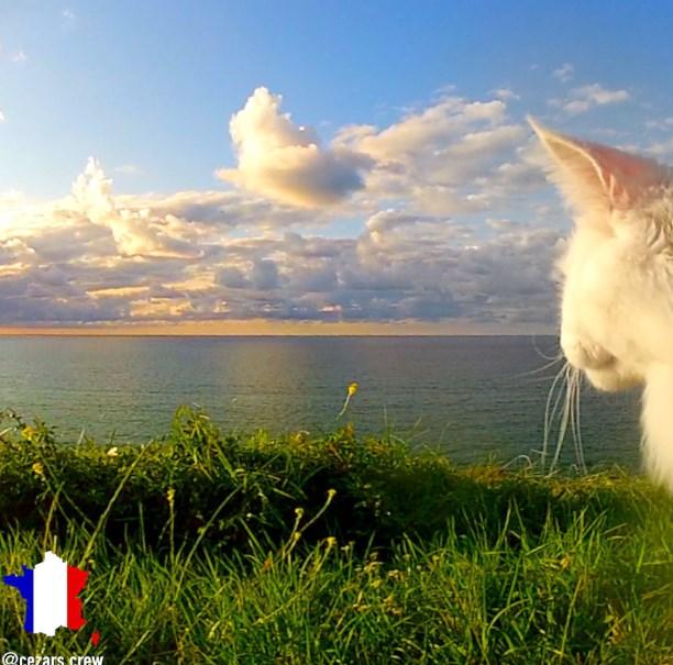 Кот-путешественник объездил уже много стран!