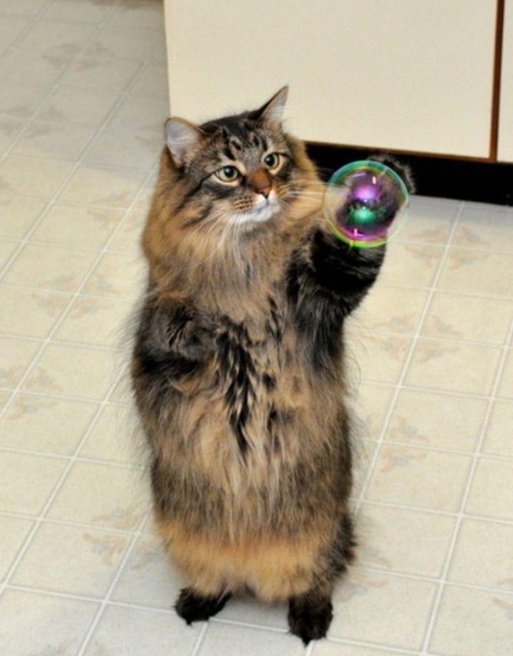 Коту для счастья нужно мало кот, фото, животные, мыльные пузыри
