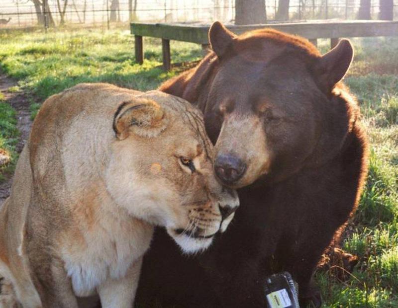 unbelievablefriendship 9 Невероятная дружба трех хищников