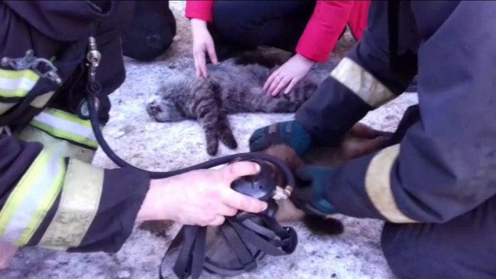 «Дыши, котик! Дыши, маленький!»: Пожарные, делавшие искусственное дыхание двум спасённым из огня котам, растрогали Рунет
