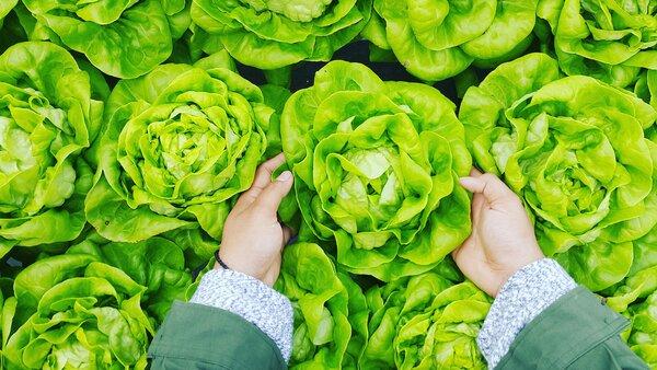 Выбираем полезную зелень