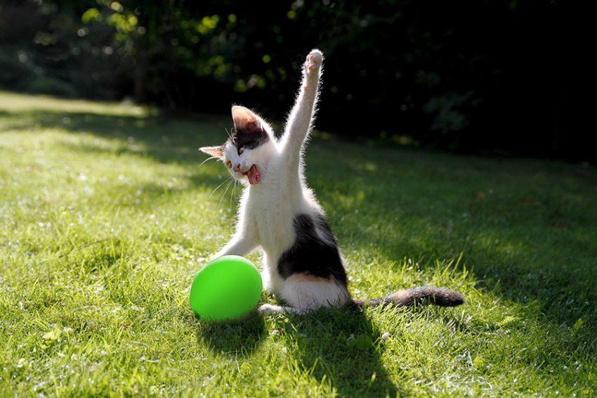 Лучшие фотографии кошек всех времен и народов кошки, фото, прикол
