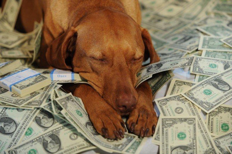 Самая дурацкая история о наследстве Любовь, Хитрожопость, деньги., муж, наследство, смерть, собака