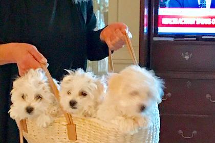 Барбра Стрейзанд два раза клонировала свою мертвую собаку
