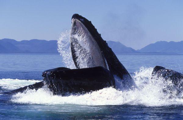 10 интересных фактов о дельфинах и китах